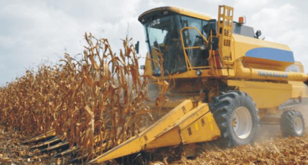 Suruç'ta mısır hasadı başladı